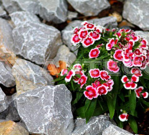 sluzby-anteco-tazba-kamena-a-strkopieskov okrasne kamene kvetina skalnicka kamene do sklaky